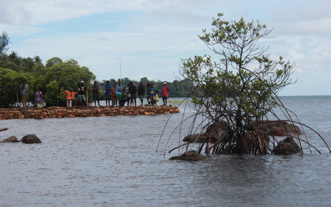 IHCantabria leads a new paper that concludes mangroves provide billions of dollars in flood risk reduction and climate adaptation benefits every year.